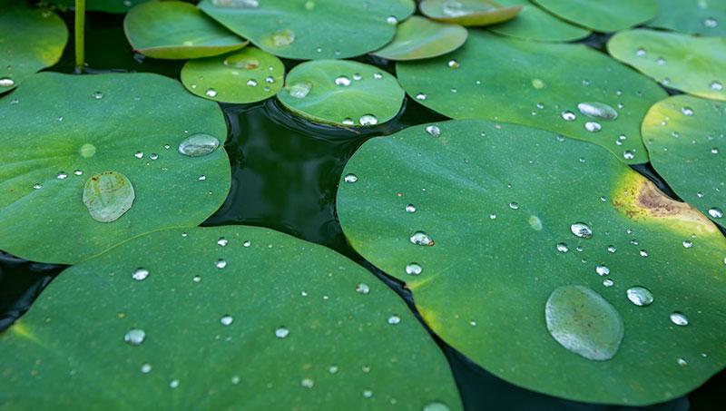 Lotus-effect door nanoINOX®, AntiFingerPrint en Easy-to-Clean.